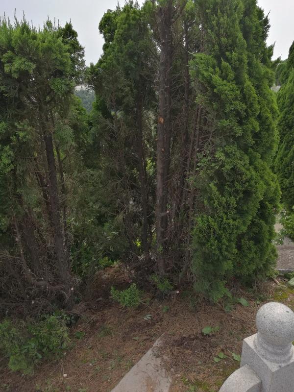 巽方有尖塔克坟,午方有尖塔克坟,又有枯树和柚子树,午冲子杀老鼠,右侧